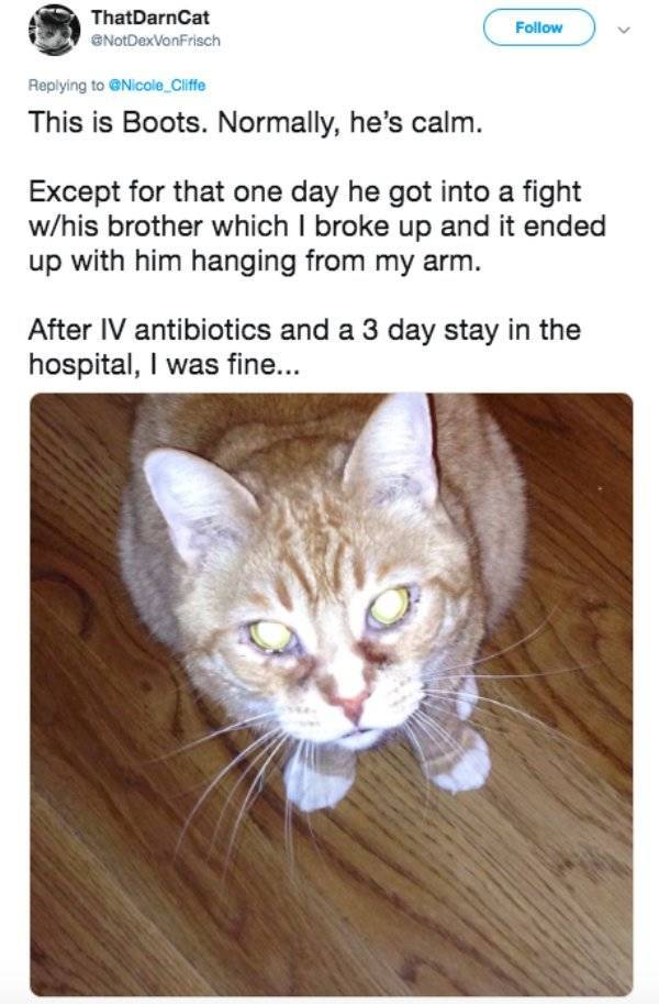 Cats Are Not Always Nice And Gentle