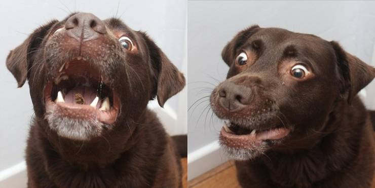 Emotions Of Surprised Animals Are 100% Pure