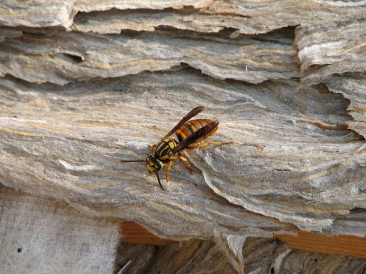 Looks Like Wasps Are Preparing To Conquer Alabama