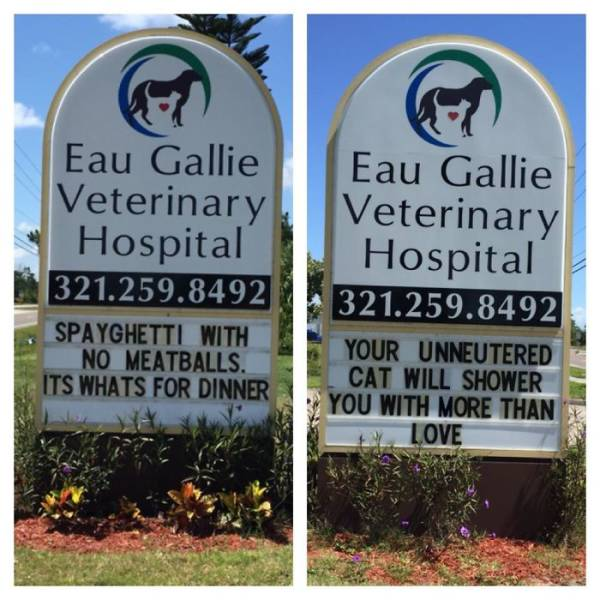 Vet Clinics Know How To Use Cat Jokes To Attract Customers