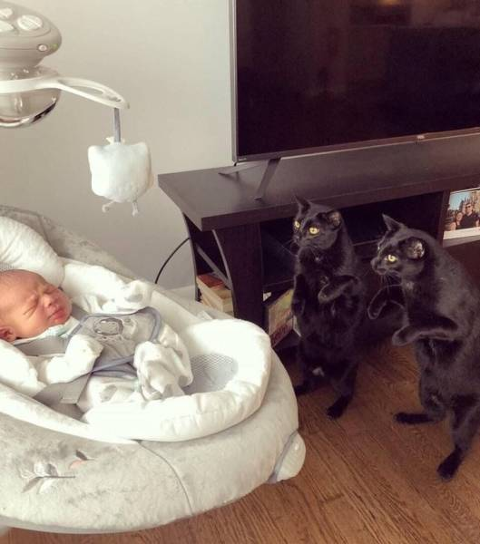 When It Comes To Cats, Everything Is Unusual