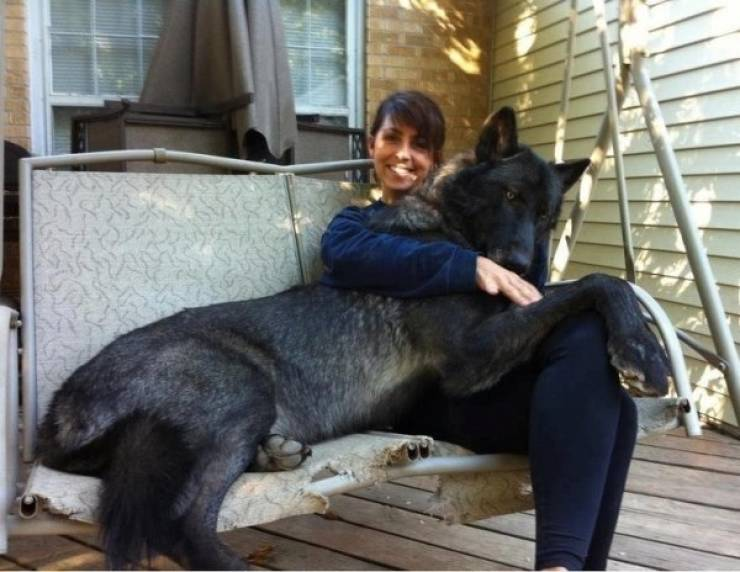 These Dogs Don't Know Just How Big They Are
