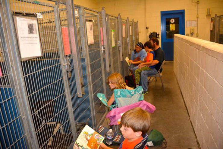 4th Of July Is Not Exactly A Holiday For Shelter Dogs, And Humans Were There To Fix It