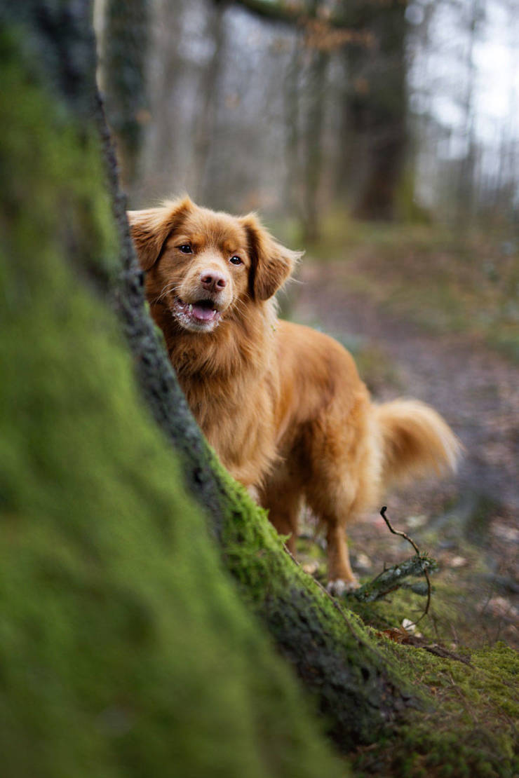 Best Photos From The Kennel Club