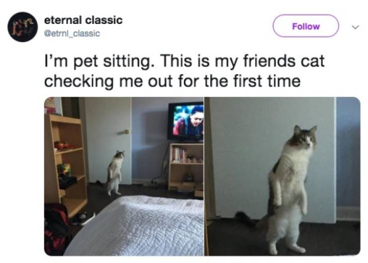 Cats Will Not Leave You Indifferent