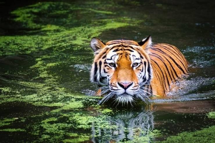 Savage Wild Animal Facts