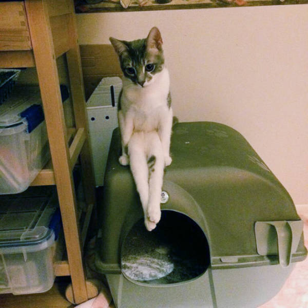 These Cats Don't Know How Cats Sit…
