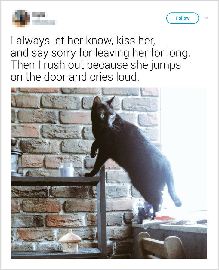 What People Tell Their Cats Before Leaving Home