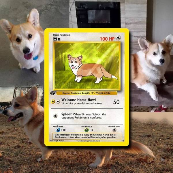 This Artist Can Turn Your Pet Into A Pokemon