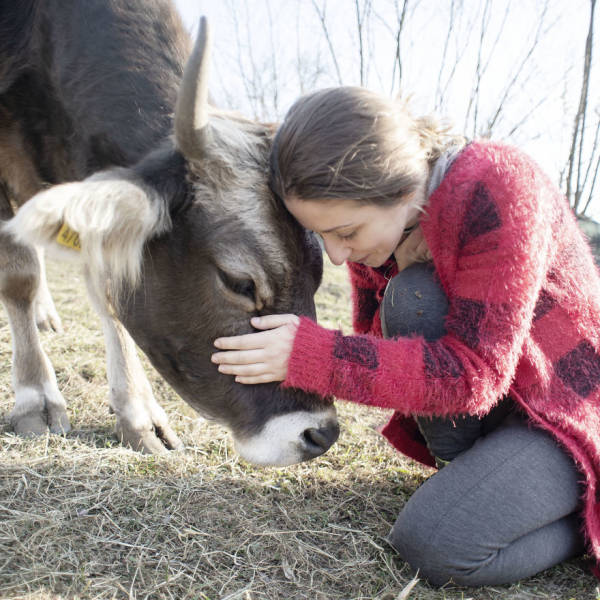 Cows Make For Great Pets, Not Meat!
