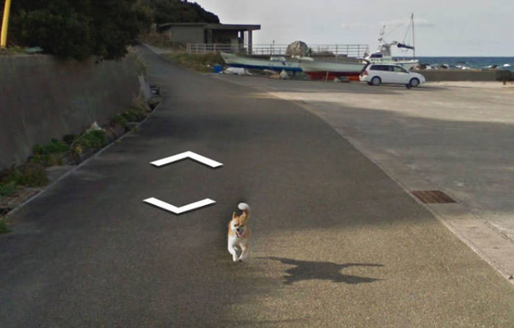 Google Street View Has The Most Unique Animal Photos