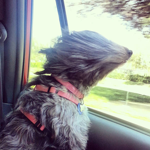 Dogs Continue To Struggle In Their Battle Against Wind