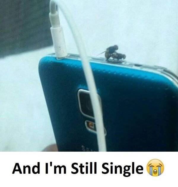 These Memes Are Single Too