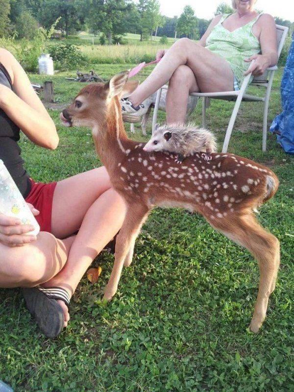 Animal Kingdom Never Fails To Impress