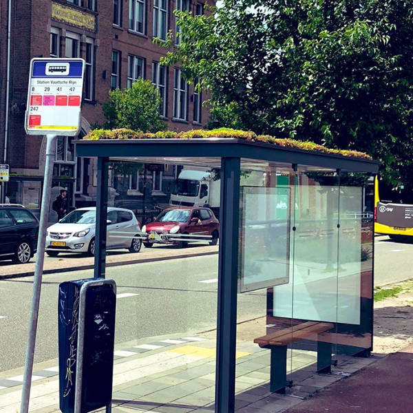 Dutch City Becomes Very Bee-Friendly