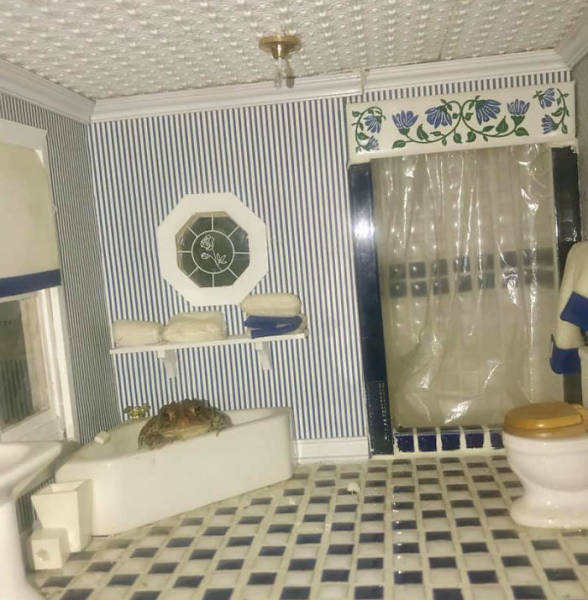 Life Of A Toad Living In A Dollhouse. What Else Do You Need?