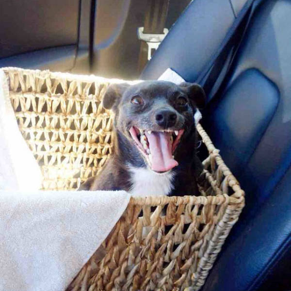When Shelter Dogs Know They're Finally Going Home