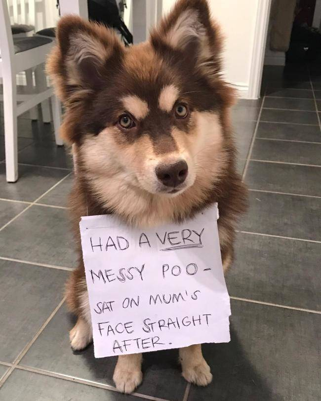 Dog Criminals Are Not So Uncommon
