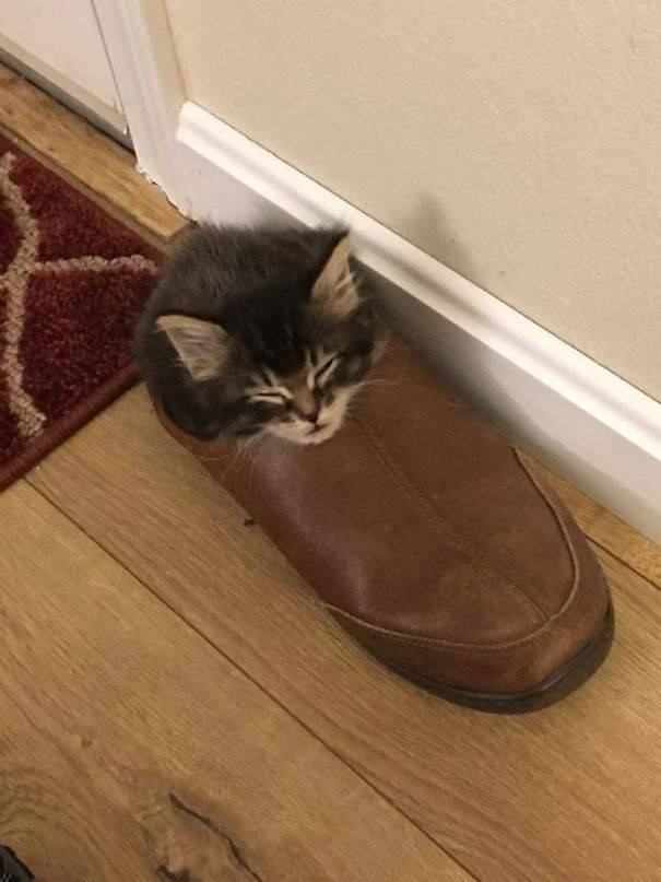 Cats Can Sleep Anywhere And In Any Position