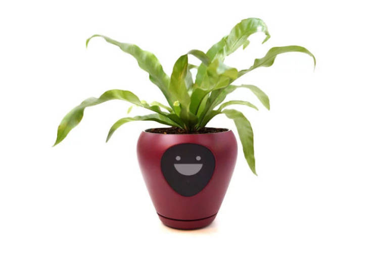 Turn Your Plant Into A Tamagotchi Game