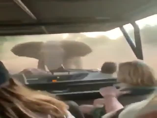 This Elephant Doesn't Seem To Like People