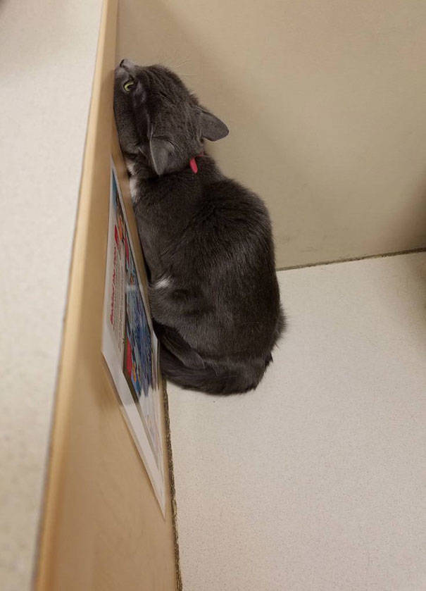 How Cats Avoid Those Awful Vets