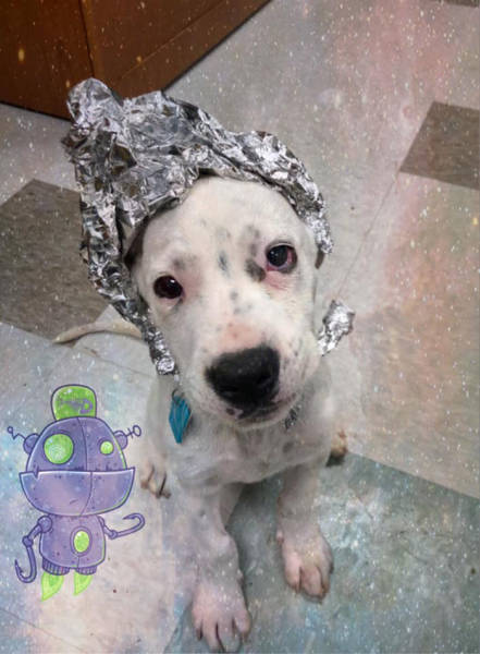 "Raid This Animal Shelter, Not ""Area 51"""