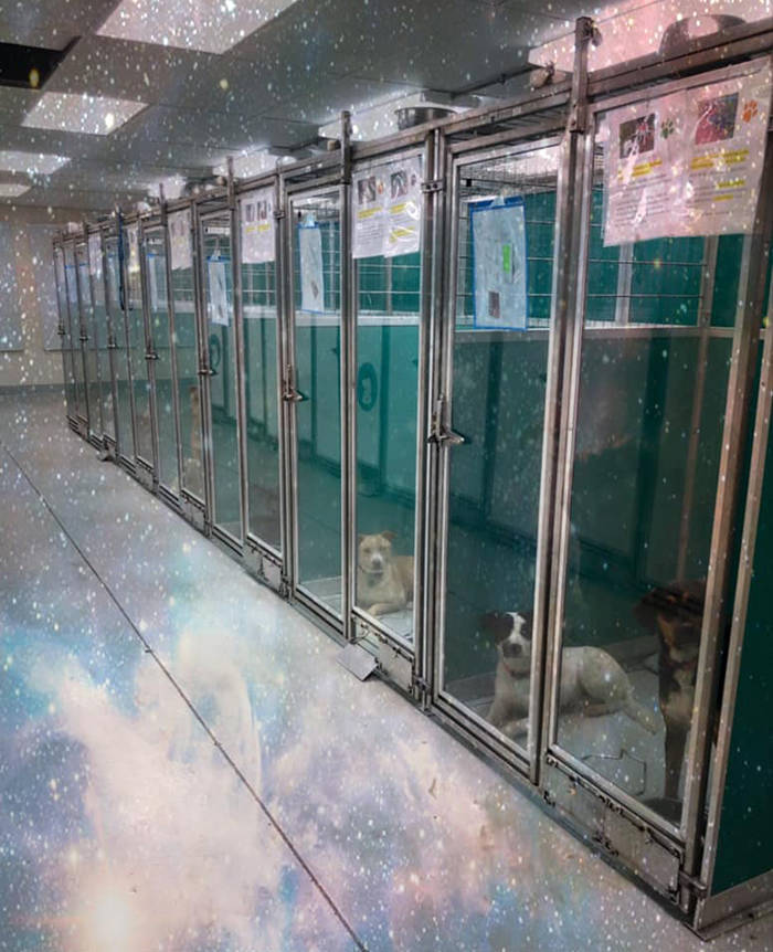 """Raid This Animal Shelter, Not """"Area 51"""""""