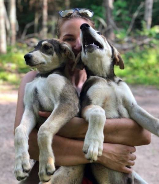 Sled Dogs Can Teach You How To Love Yourself