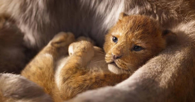 Meet The Adorable Model Behind Baby Simba From The New ...