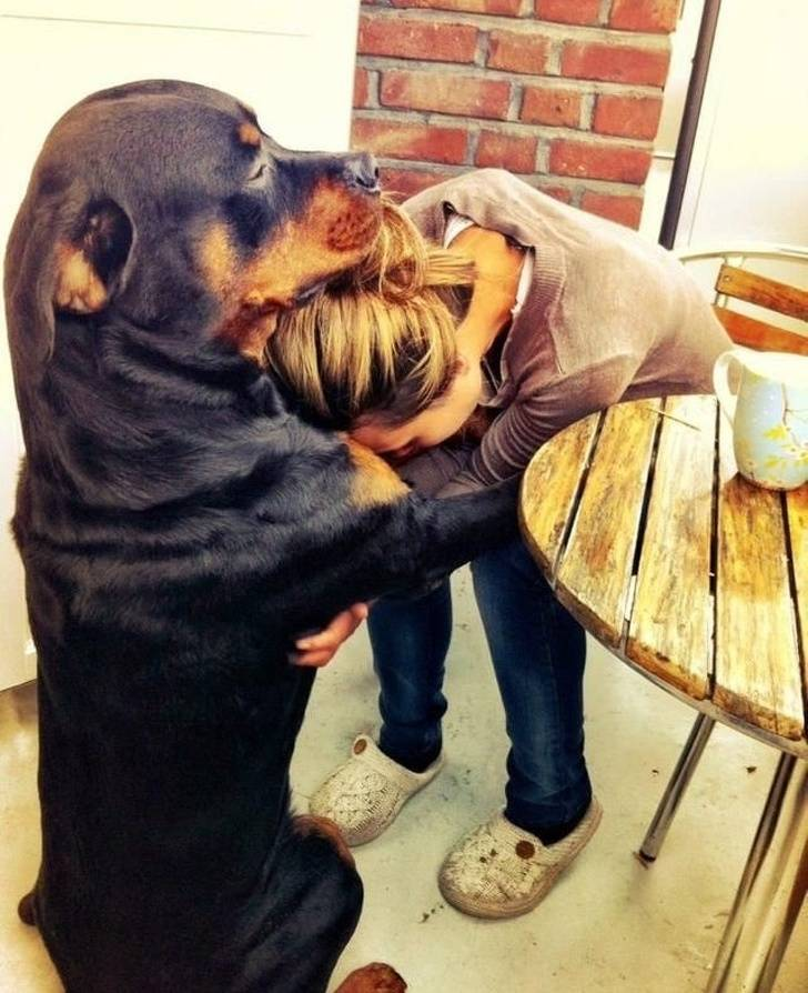 Animals Have Way Too Much Love Inside Them