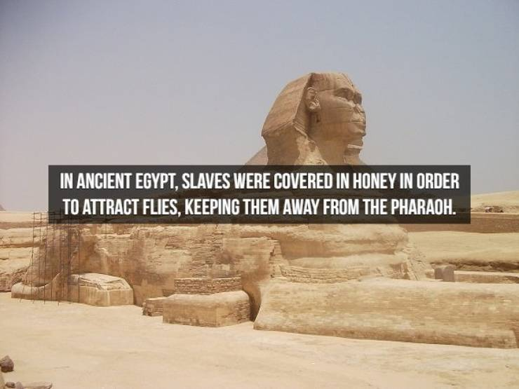 These Historical Facts Needed To Be Unearthed