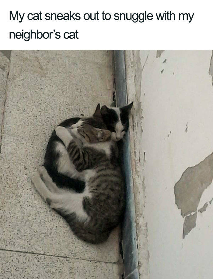 Adorable Cats You Need Right About Now