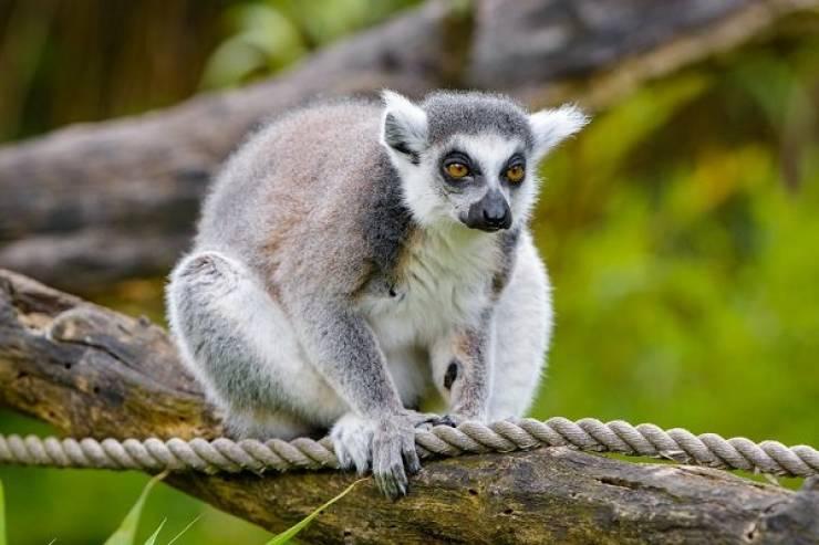 Madagascar Is Full Of Very Unique Animals