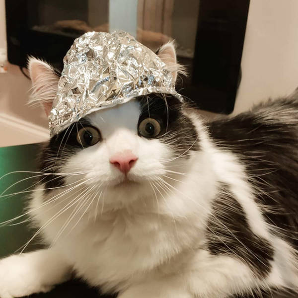 Protect Your Pets From 5G Radiation!