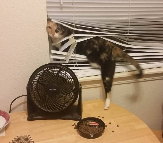 Cats Don't Need Your Dumb Permissions