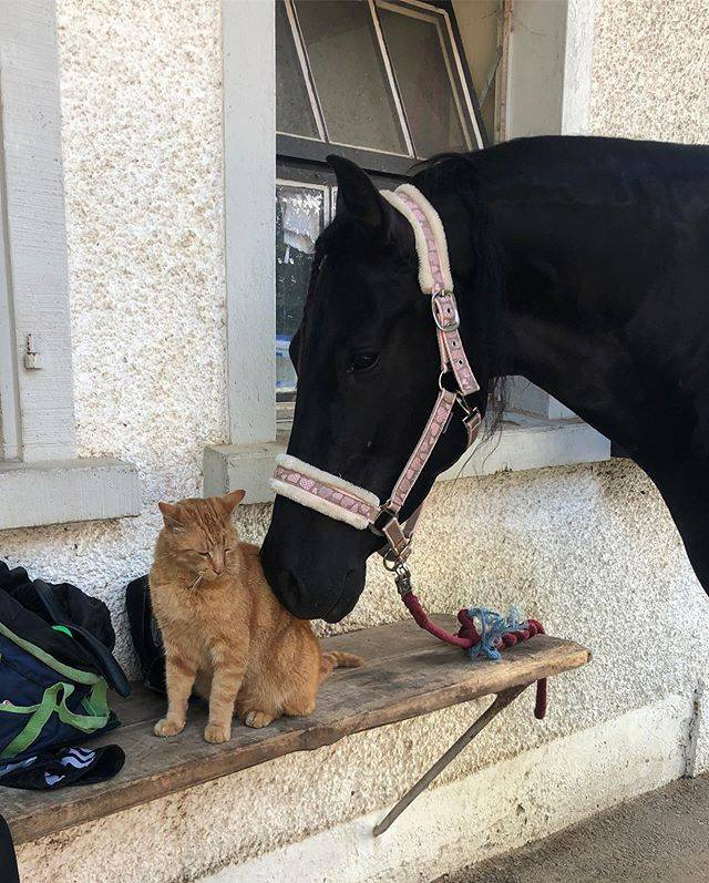 Animals Can Teach Us A Lot About Friendship