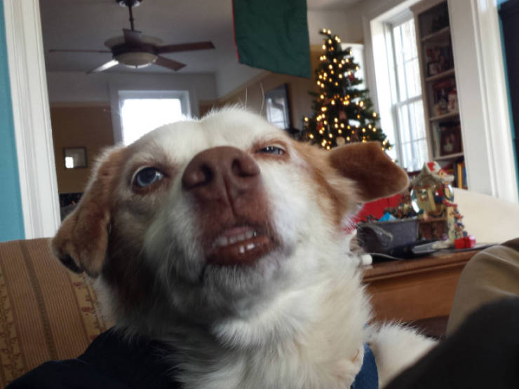 Hey, Dog, Are You Sneezing Right Now?