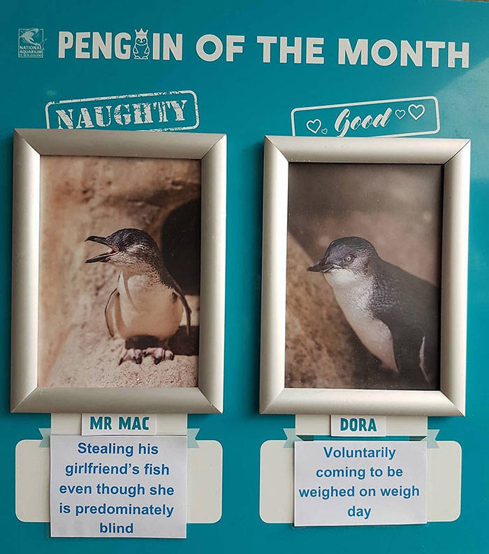 There's So Many Naughty Penguins In This New Zealand Aquarium