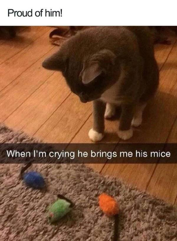 Well, So Cats Can Actually Be Gentle And Loving