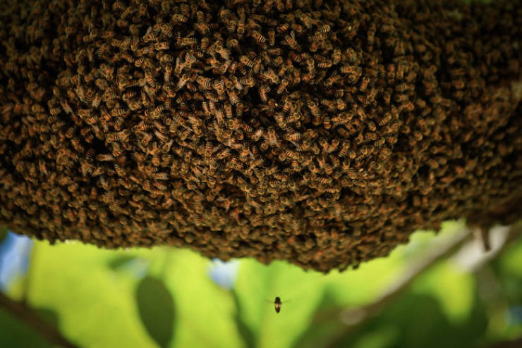 500 Million Bees Have Died In Brazil Since Last December, And It's Not A Good Sign