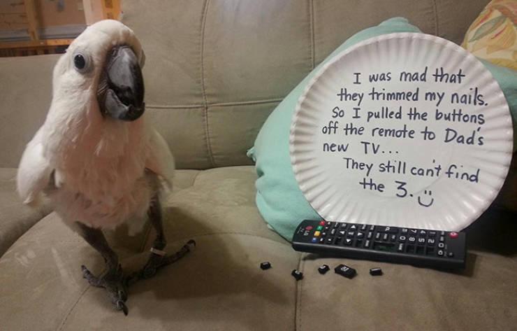 Birds, Behave Yourself!
