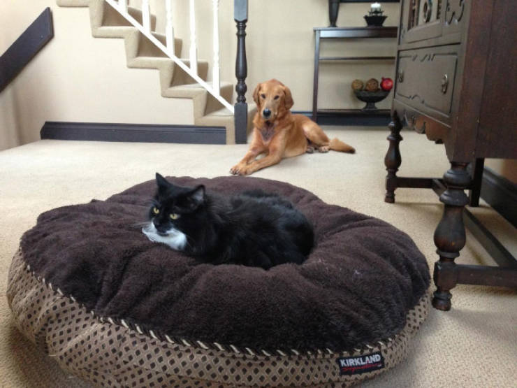 Dog Beds Are Made For Cats, And Cats Only