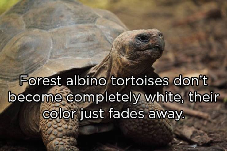 Go Into The Wild With These Animal Facts