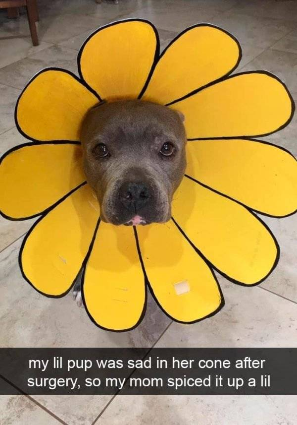 Snapchat Is A Place Where Humans Worship Dogs