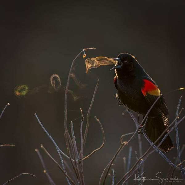 Photos Capturing The Magic Of Nature