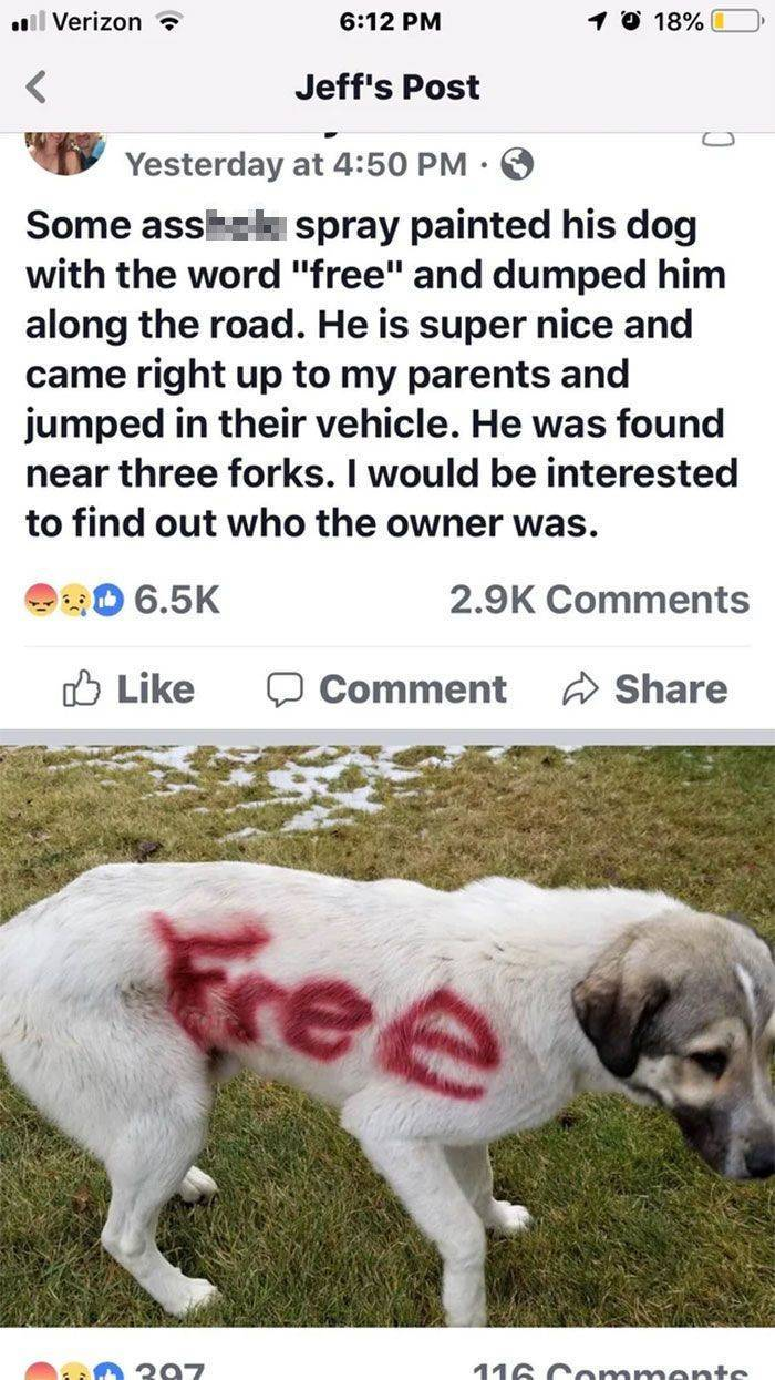 These People Really Needed To Pass Pet Owner Tests First