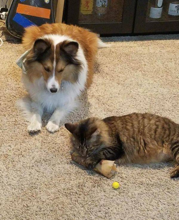 In Cats Vs. Dogs No One Ever Really Wins