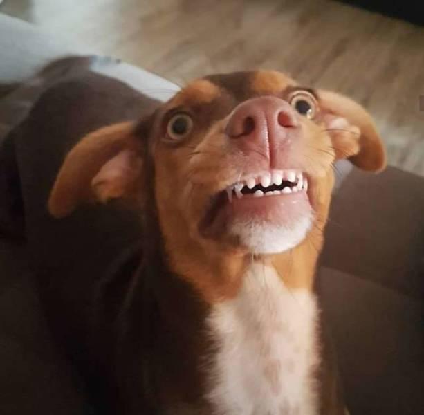 Where Did Grandma's Dentures Go?