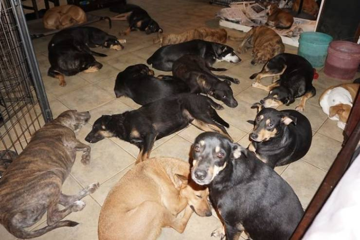 There Was A Category 5 Storm Over The Bahamas, But These Stray Dogs Were Safe And Sound